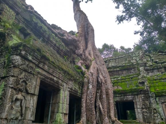 Templo Ta Prohm, Camboya