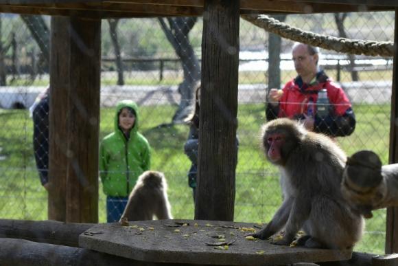 Monos: los más peligrosos, o los que pueden escaparse, son los que están en jaulas. Foto: Leonardo Mainé
