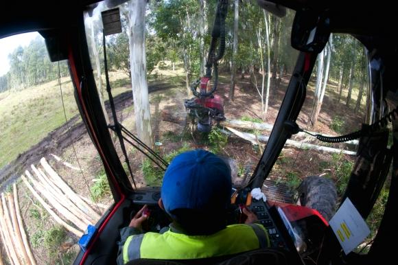Trabajador de empresa forestal en Paysandú. Foto: Fernando Ponzetto