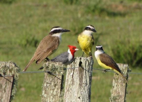 Avistaje de aves en Paso Centurión. Foto: Gabriel Rocha