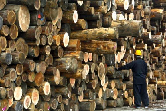 Forestación. Foto: Archivo El País