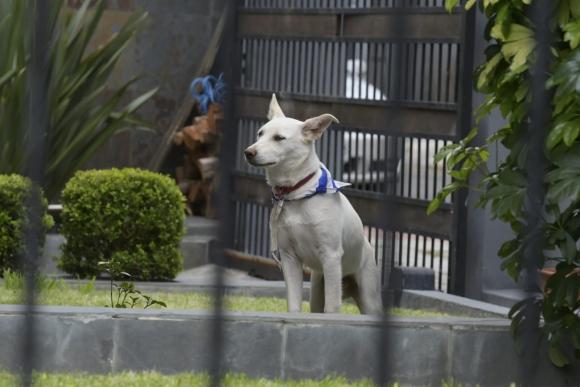 """""""Cuarto"""", el perro que encontró Daniel Martínez. Foto: Leonardo Mainé"""