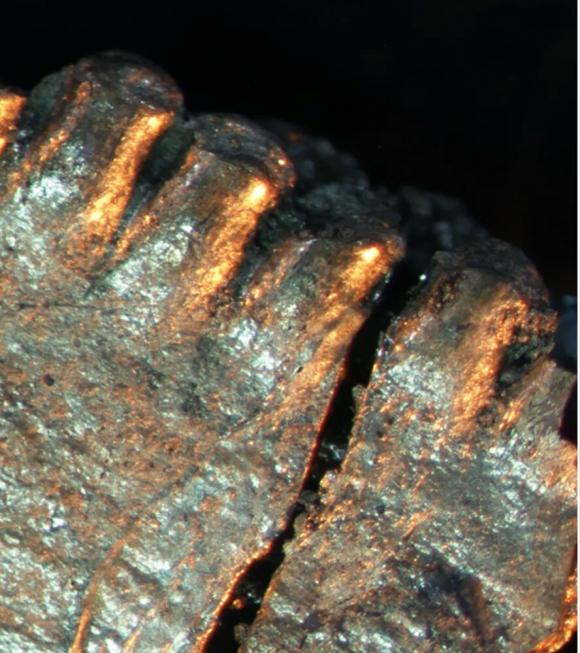 torvosaurus dinosaurio tacuarembó diente