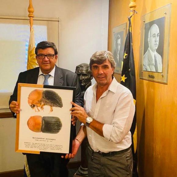 Jorge Barrera y Luis De María con el cuadro del registro del Xylosandrus aurinegro.