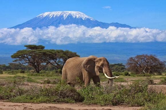 El África vista por Ernest Hemingway en varias de sus obras.