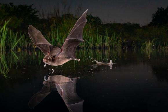 Vida con alas. Foto: Big Picture Natural World Photography 2020