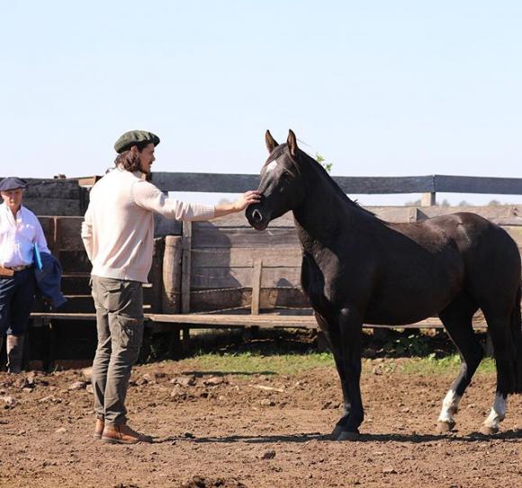 Edinson Cavani junto a uno de sus caballos. FOTO: @ECavaniOfficial