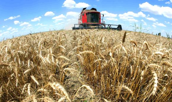 El agro es el sector más endeudado en relación a su producción. Foto: Reuters