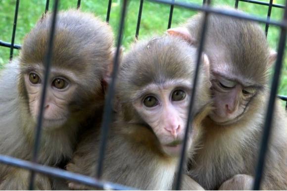 Monos abrazándose. Foto: La Nación / Facebook