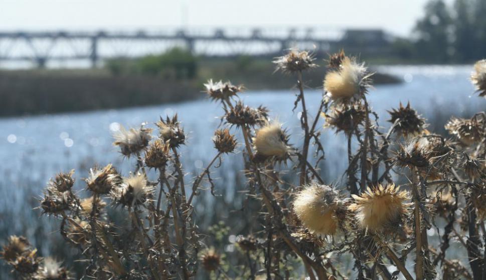 Se realizaron visitas guiadas por el entorno del Río Santa Lucía para poner al día lo que se hace en preservación  especies y su medio ambiente. Foto: F. Flores