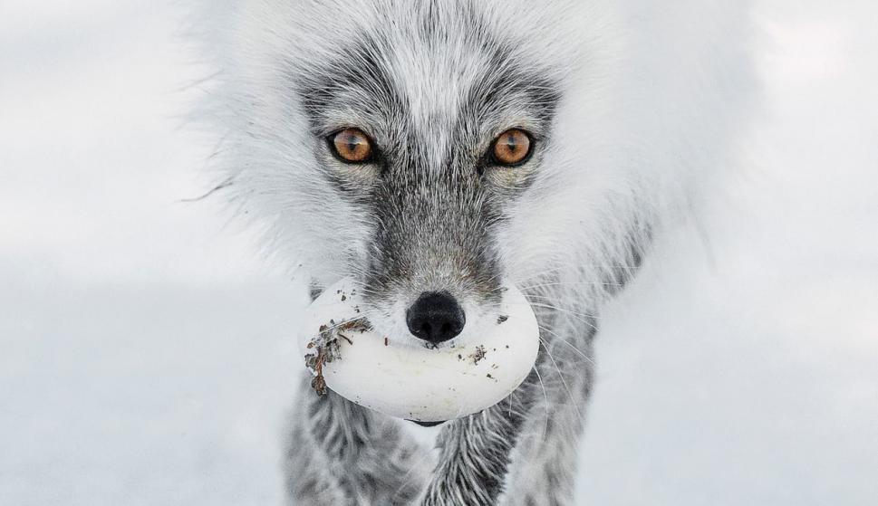 Finalistas del Wildlife Photographer of the Year. Foto: Sergey Gorshkov/2017 Wildlife Photographer of the Year