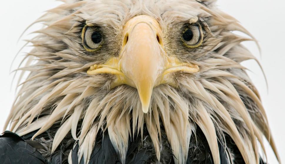 Finalistas del Wildlife Photographer of the Year. Foto: Klaus Nigge/2017 Wildlife Photographer of the Year