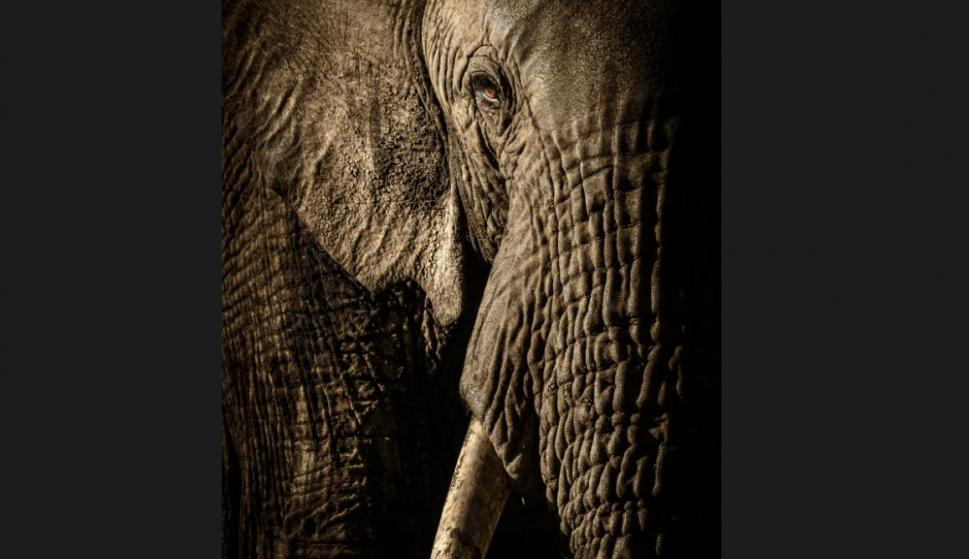 Finalistas del Wildlife Photographer of the Year. Foto:  David Lloyd/2017 Wildlife Photographer of the Year