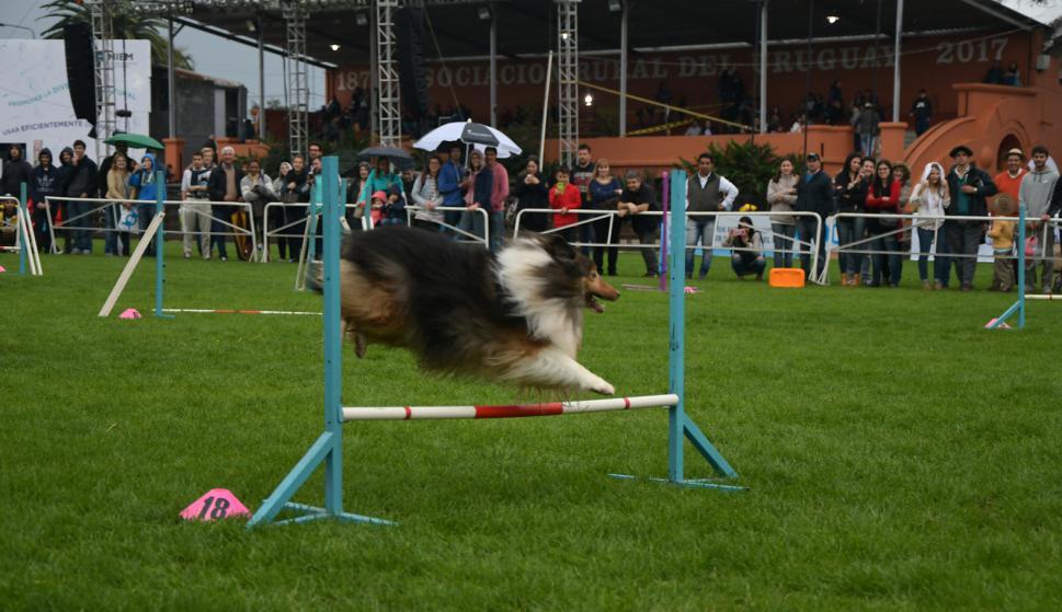 De todo; también los perros mostraron su destreza en el Prado. Foto: Ariel Colmegna