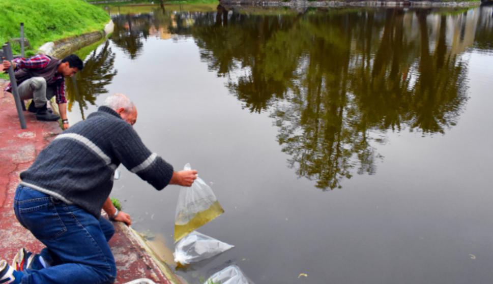 Varias especies de peces fueron introducidos al lago renovado. Foto: IMM