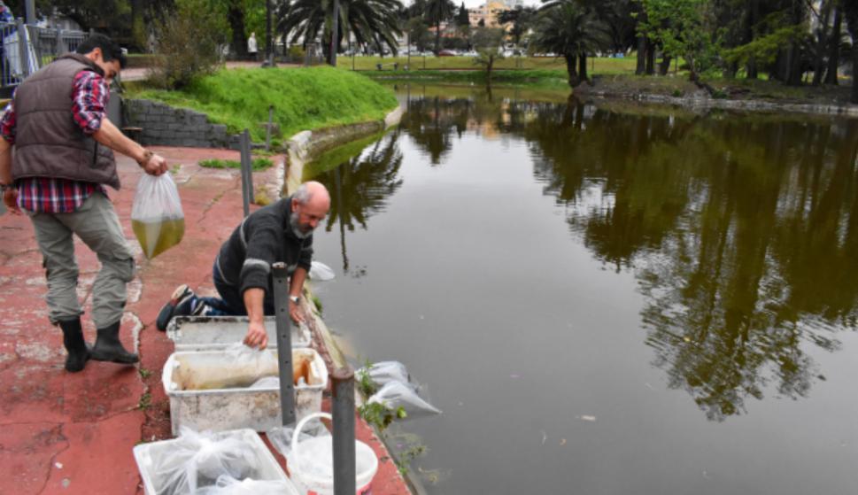 El lago comenzó a restaurarse en 2016. Foto: IMM