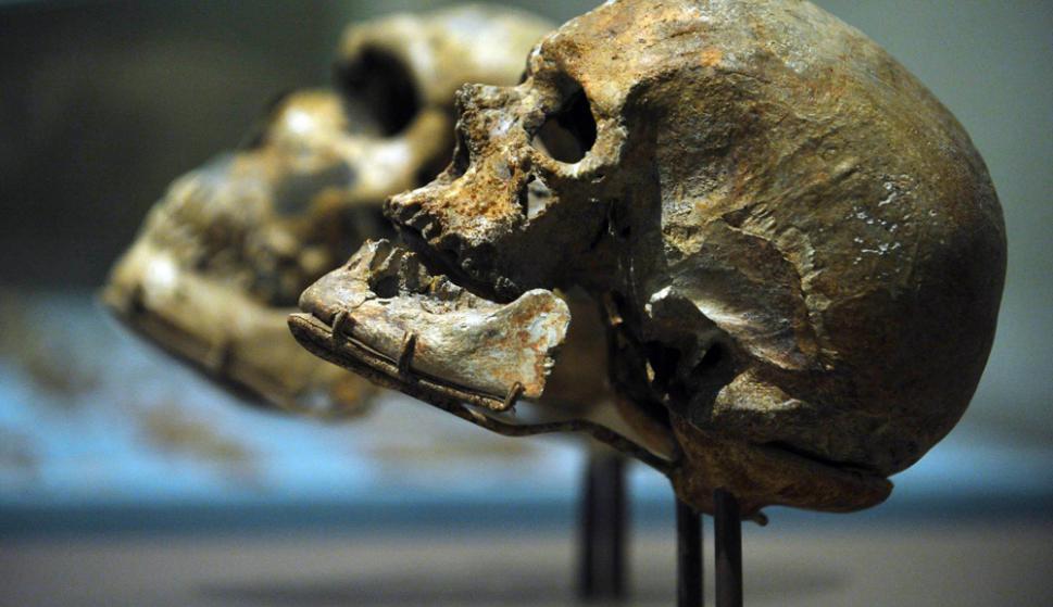 El tórax de los neandertales estaba adaptado para conseguir más ...
