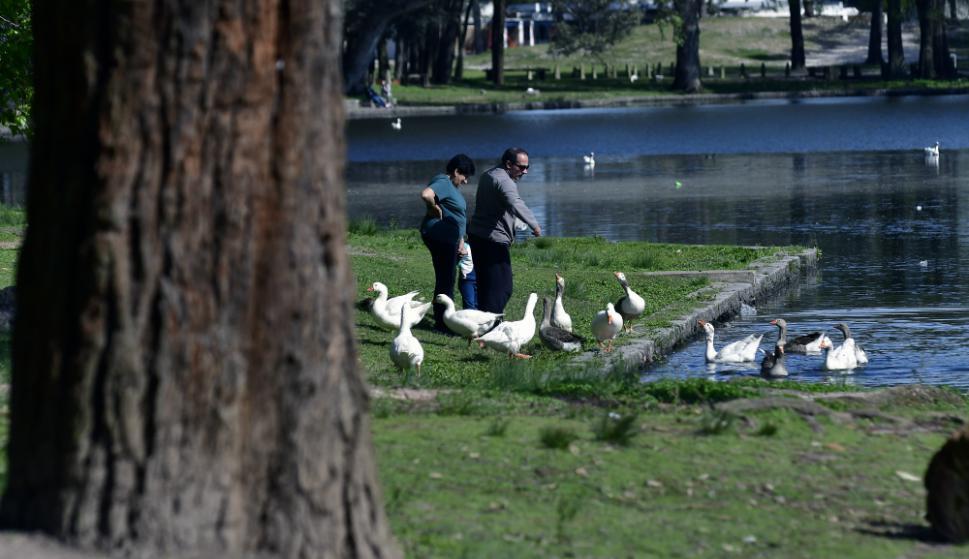 El Parque Rivera cuenta con la mayor colección de eucaliptus de Montevideo. Foto: F. Ponzetto