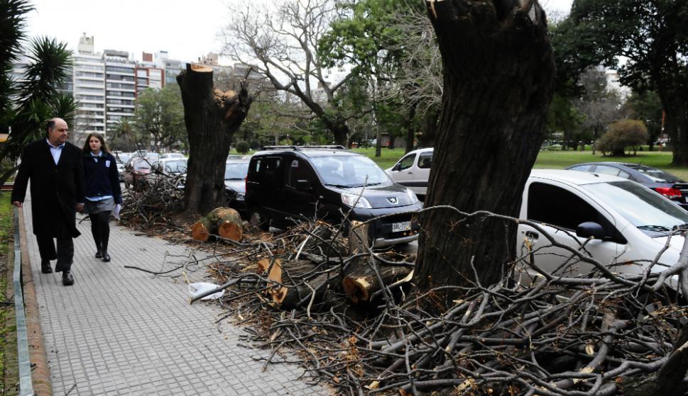 Árboles recientemente descopados en el parque Villa Biarritz. Foto: M. Bonjour