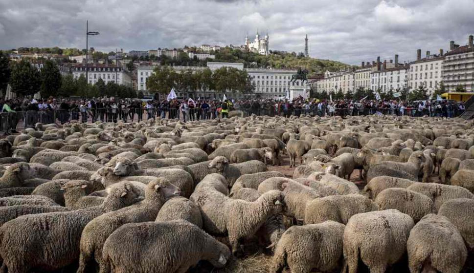 Productores rurales manifestaron contra el aumento de lobos en el Lyon. Foto: AFP