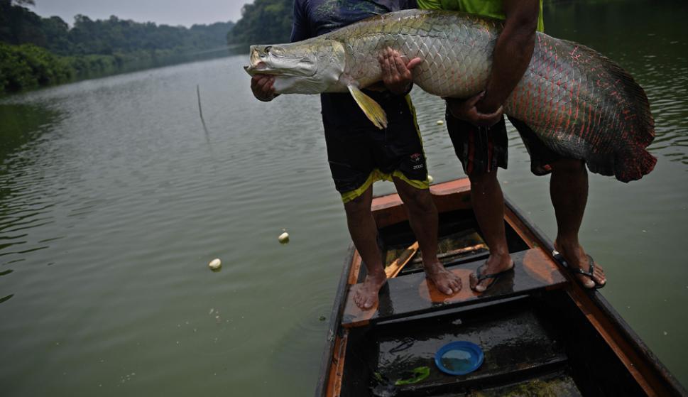 Reserva Extractiva Medio Purus. Foto: AFP