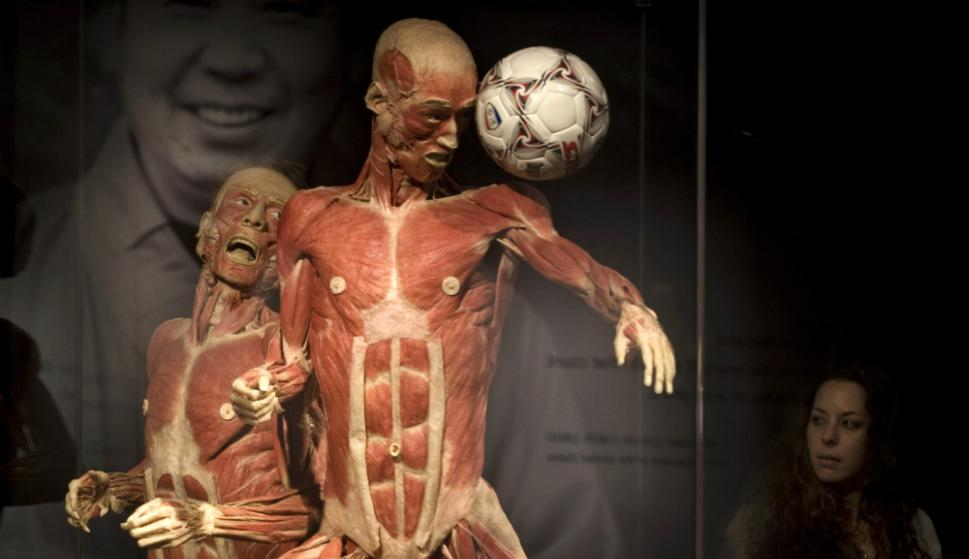 Los cuerpos plastinados son manipulados hasta plantarlos en plena acción. Foto: AFP