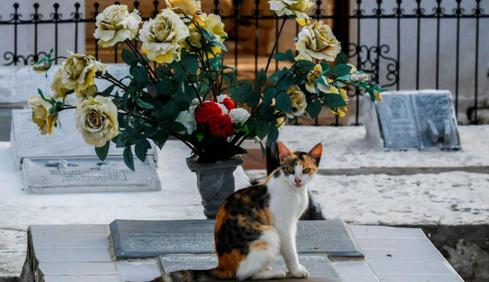 Gatos cuidan tumbas en pueblo colombiano