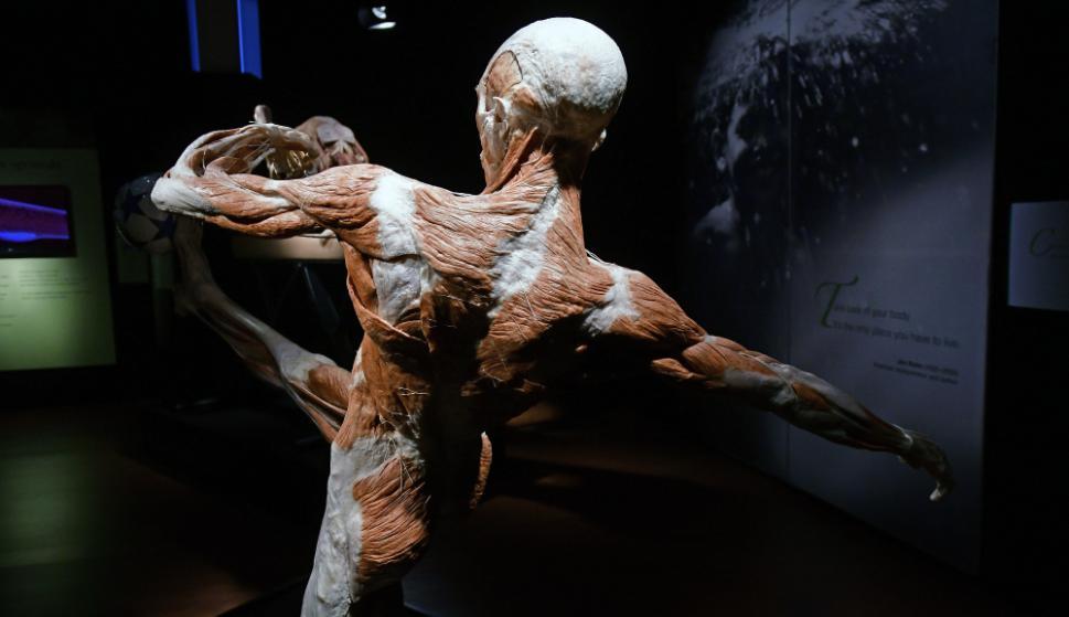Los cuerpos son articulados en diversas posiciones. Foto: Fernando Ponzetto