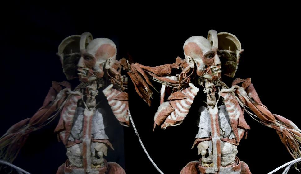 Llega polémica muestra de momias - Información - Últimas noticias de ...