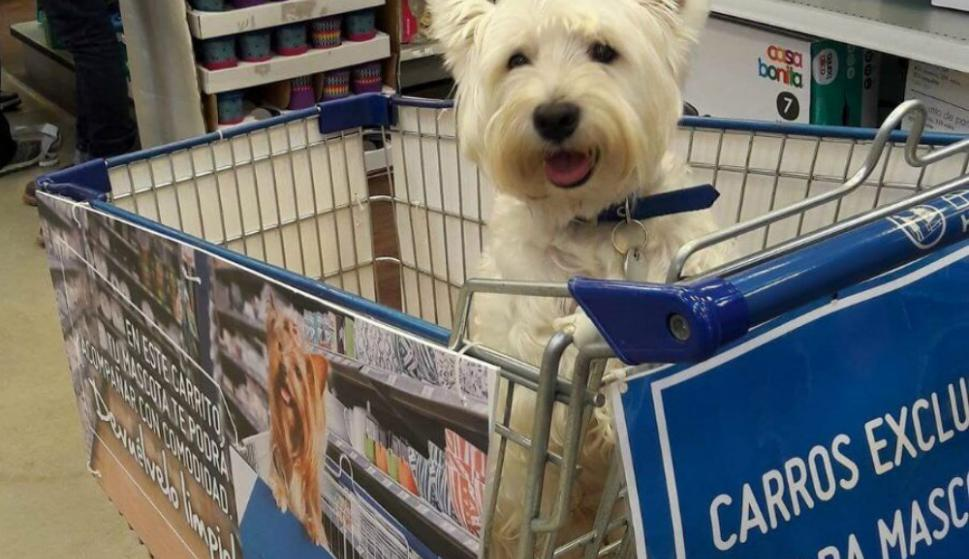 En Sodimac tienen carritos específicos para que los usuarios recorran el local con sus mascotas. Foto: El País