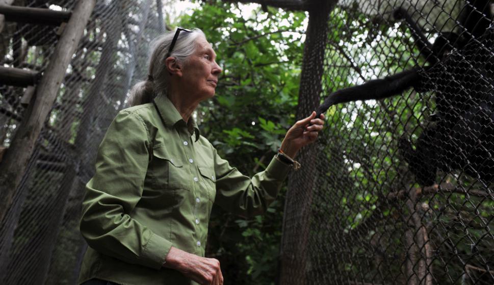 Jane Goodall. Foto: AFP