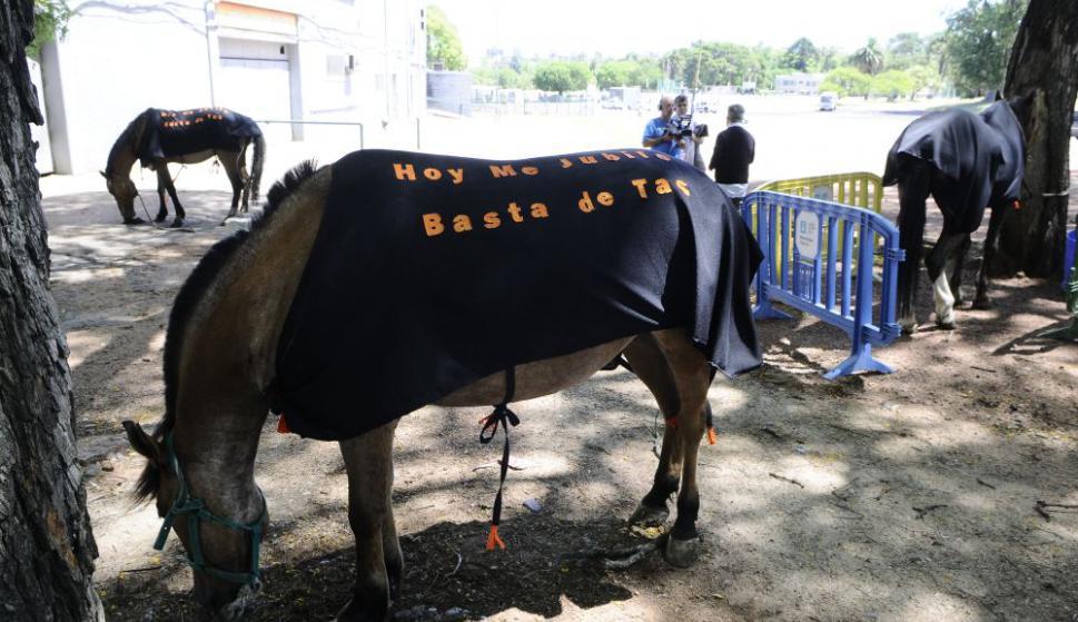 Los voluntarios que adoptarán a los caballos surgieron de un llamado. Foto: Darwin Borelli
