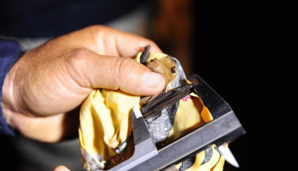 Murciélagos en Galápagos