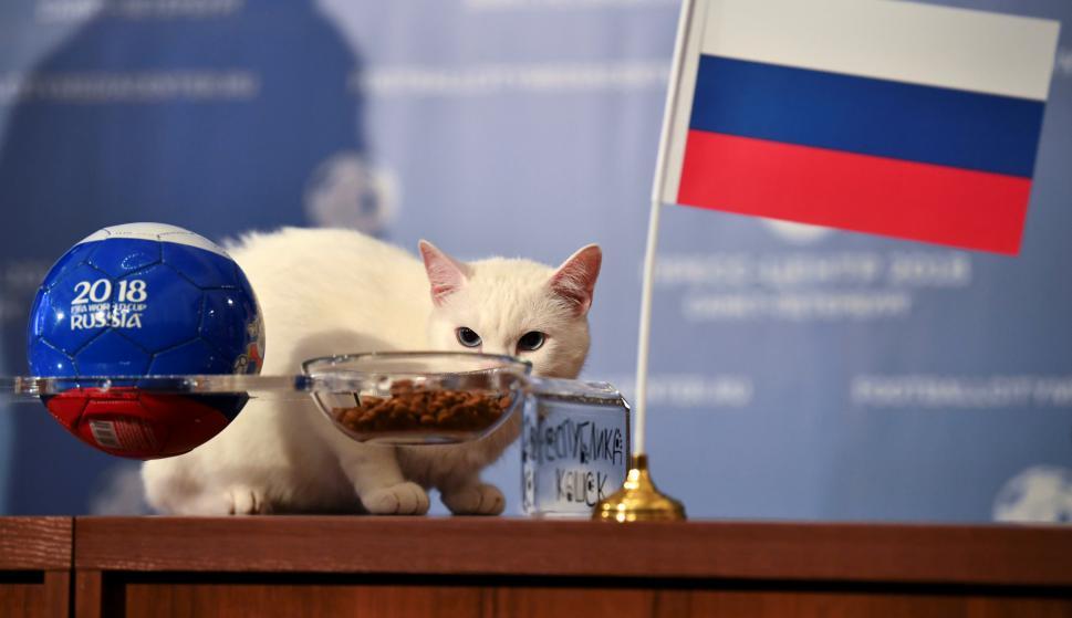 Resultado de imagen para el gato aquiles