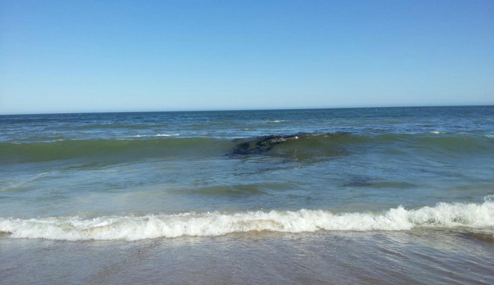 Nuevo vertido de crudo en las playas del este de Maldonado
