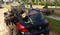 Caída: luego del hecho el auto quedó convertido en chatarra. Foto: R. Figueredo