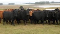 Faena de bovinos lleva 14% por encima ( a mayo) que el año anterior. Foto: Archivo