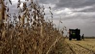 Según Ganadería, en este ciclo mejorará la producción de soja. Foto: Archivo