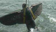 Intacta: la pieza de 300 kilos fue rescatada en Punta Yeguas.