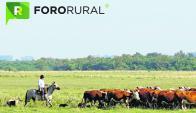 En suelos más fértiles, la ganadería Voisin no se achica en rentabilidad. Foto: ForoRural