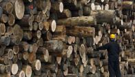 Rolos: para los eucaliptos el principal comprador es Vietnam. Foto: EFE