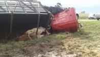 Algunos vacunos quedaron atrapados debajo del camión que volcó. Foto: N. Araújo