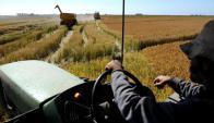 Cereal: los costos serían muy similares a los de la zafra pasada. Foto: AFP