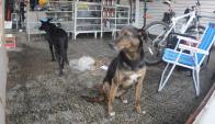 Dos de los canes que formaron parte del relevamiento de hogares. Foto: F. Ponzetto