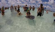 """""""Nadar"""" con mantarrayas, una de las actividades para hacer en Antigua."""
