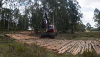 UPM: la empresa finlandesa construirá una nueva planta de celulosa. Foto: F. Ponzetto