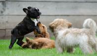 Revelan que hay más de 1.500.000 de perros en Uruguay. Foto: Pixabay