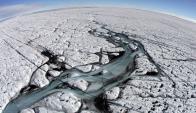 La Antártida forma parte del circuito migratorio de muchas aves.