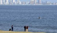 Las ballenas llaman la atención de los curiosos que bajan a la playa para contemplarlas. Foto: R. Figueredo