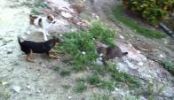 Perro persiguió a gato y sus propietarios terminaron enfrentados. Foto: El País